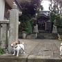 小浜八幡神社