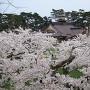 桜の海に浮かぶ函館奉行所