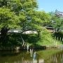 堀と新緑の中の東櫓