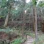 杉木立と石垣