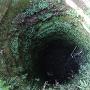 陣屋井戸の中