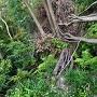 登城路の木橋