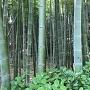 竹藪と土塁