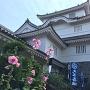立葵と大多喜城