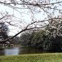 道灌堀と桜