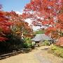 芳徳寺と紅葉