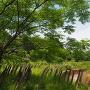 逆茂木と環濠
