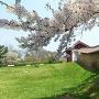 外郭東門と築地と桜