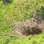 主郭下の井戸跡