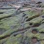 岩礁ピット集中