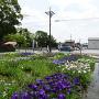 曽根城公園の花しょうぶ