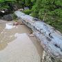 緑泥片岩の無加工橋を南端から(表御殿庭園)