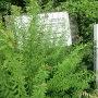 雑草におおわれた案内板と標柱