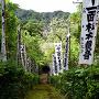 杉本寺 苔の石段(上から)