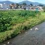 神川の流れ
