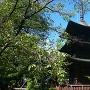 重文国分寺三重塔