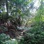 堀らしいのですが藪が深くて。