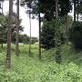 全面夏草の堀跡