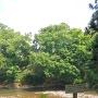 東館の虎口跡と木橋跡