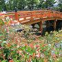 アベリアと数寄屋橋