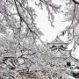 彦根雪化粧