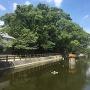 福島八幡宮横の文化池