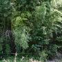 城跡碑の裏の藪に何かありそう。