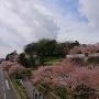 兼六園側から見た金沢城外壁