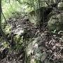 藪の中の石積み