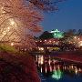 ライトアップされた岡崎城と夜桜[提供:岡崎市]