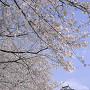 岡崎城と桜[提供:大村市観光コンベンション協会]
