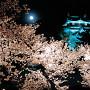 岡崎城と夜桜[提供:岡崎市]