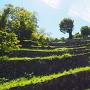 夏の七段石垣