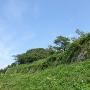 草のナイアガラ(本丸跡 海側石垣)