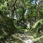搦手口から眺める富士見台跡の石垣