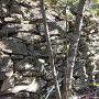 外曲輪西面の石垣