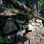 倒木と石垣