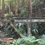 熊本ふるさとの森林 古麓歴史の森