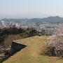 桜と大山(本丸から)