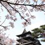 桜と天守[提供:PIXTA]