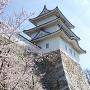 桜と巽櫓[提供:明石観光協会]
