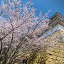 桜と坤櫓[提供:明石観光協会]