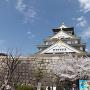 桜満開の大阪城