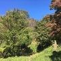 「城ダン」から主郭方向を見上げる