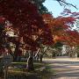 本丸の紅葉