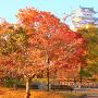 朝日と紅葉のシロトピア記念公園にて