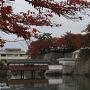 石垣とお堀に紅葉が映えますね