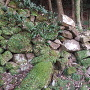 唐船城 崩れた石垣①