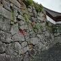 石垣にも秋が訪れました。