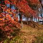 本丸と紅葉